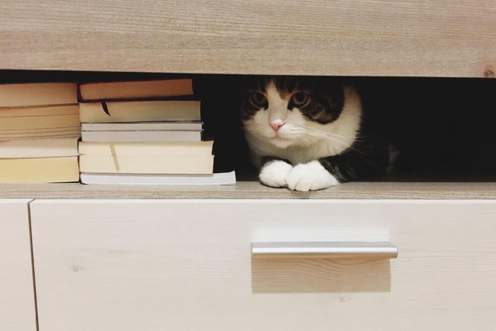 decor-pisica-2