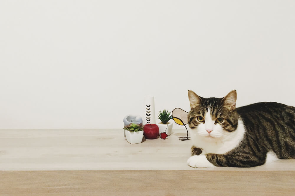 decor-pisica-3
